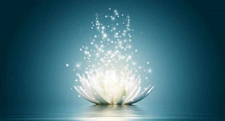 lotus-sparkle